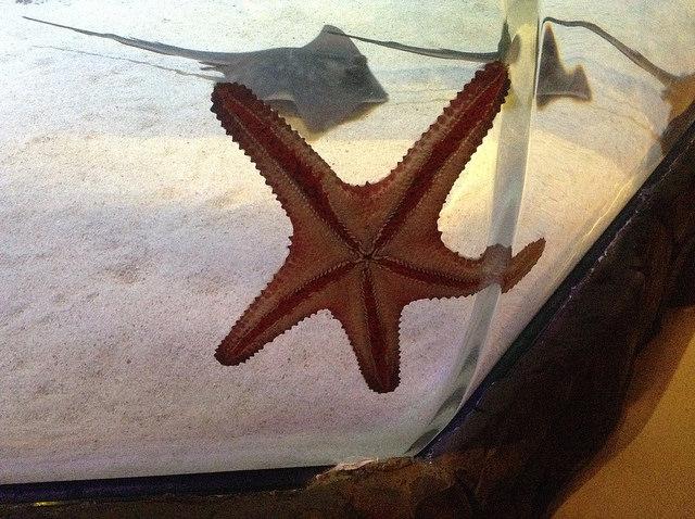 Cool starfish - Sydney Aquarium