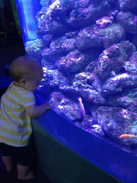 Sydney Aquarium - Perfect Eye level for kids.