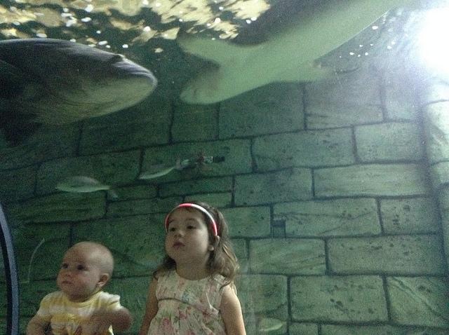 Sydney Aquarium - Girls loved the shark tank