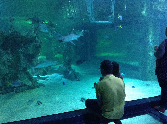 Sydney Aquarium - So much to see and do!