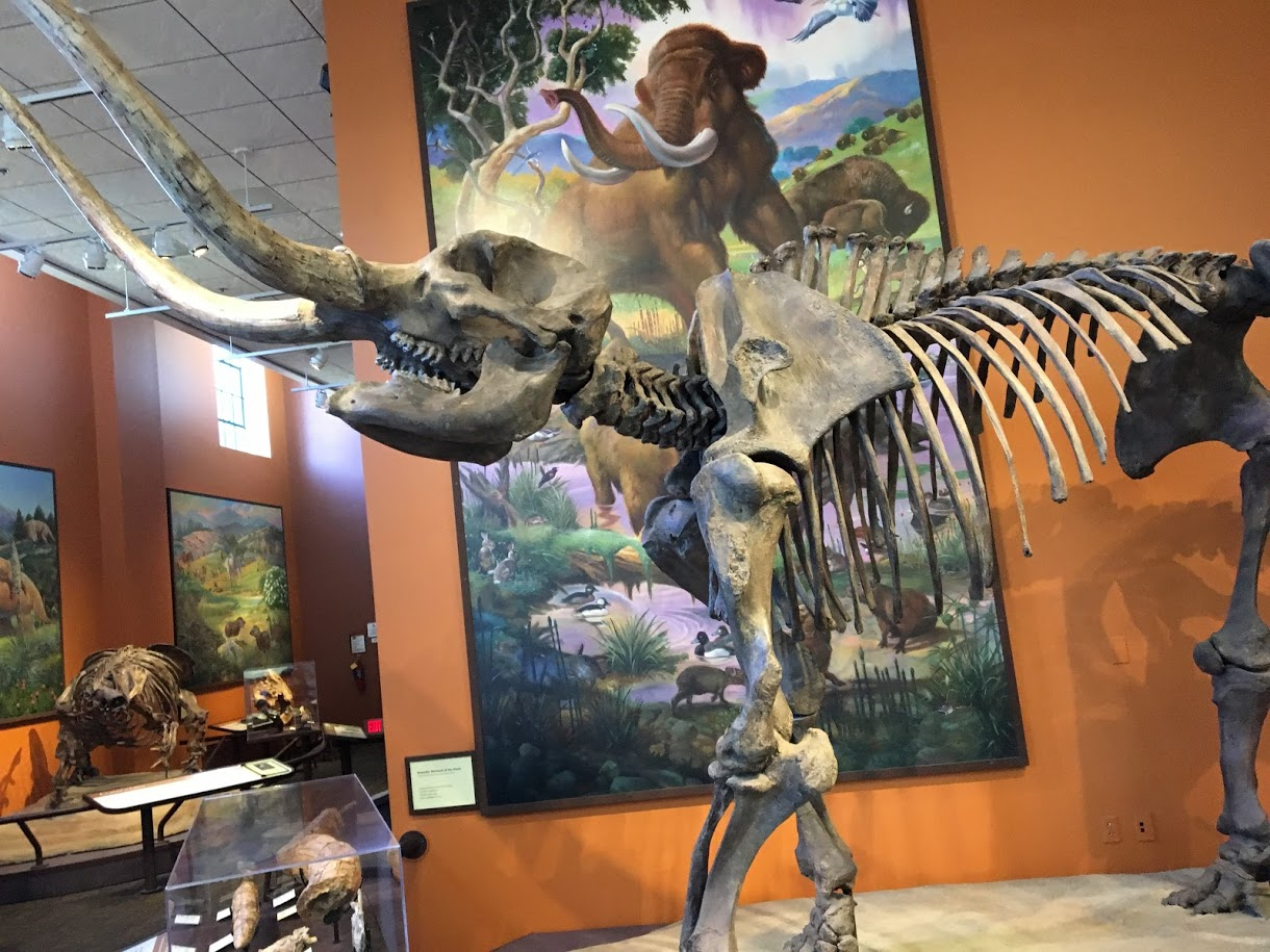 San Diego Natural History Museum Review (The Nat)